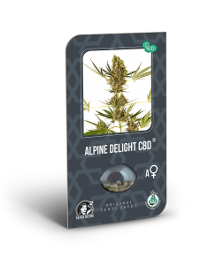 alpine delight cbd (sensi seeds)