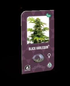 black harlequin (sensi seeds)