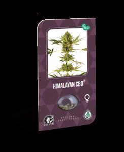 himalayan (sensi seeds)
