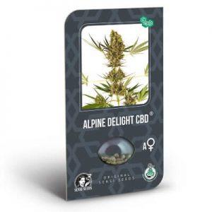 graines alpine delight cbd