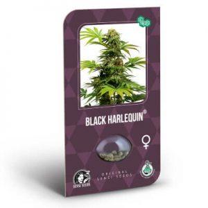 graines black harlequin cbd
