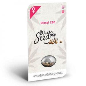 graines diesel cbd