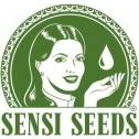 Avis sur Sensi Seeds : le spécialiste de la vente de graines CBD en ligne