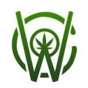 Captain Weed : notre avis sur la boutique qui combat le CBD sans goût ou trop cher