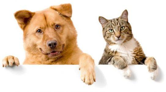 chiens et chats cbd