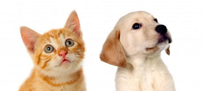 cbd pour chiens et chats